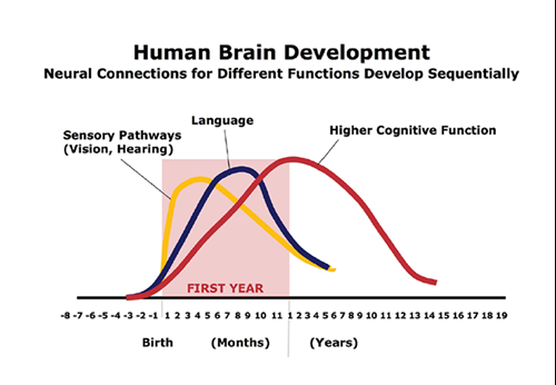 Human Brain Development in Early Days of Life